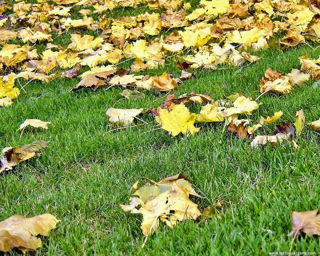 feuillesmortes.jpg
